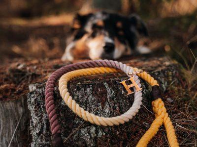 HOUND x DOG WANDERER